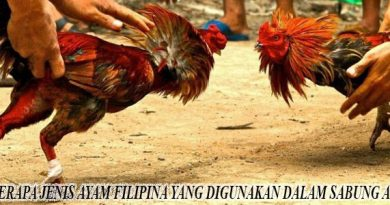 Jenis Ayam Filipina